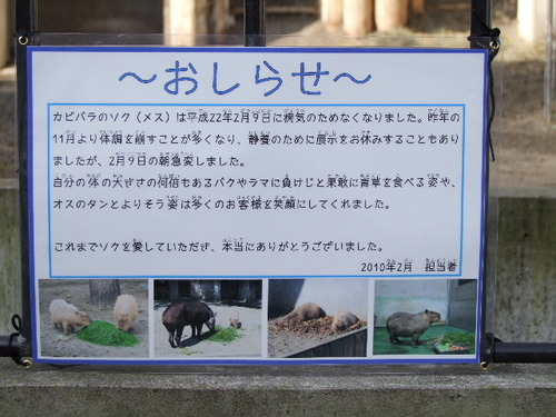 2010_0214100 上野動物園0008.JPG