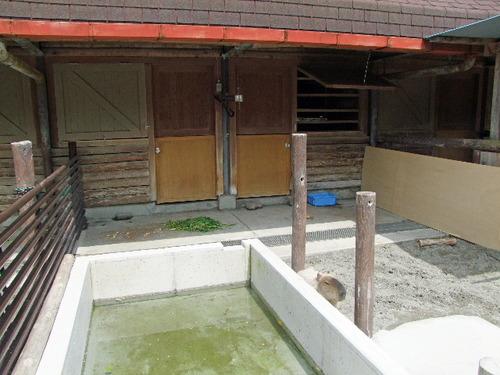2010_0429100 上野動物園0129_edited-1.JPG