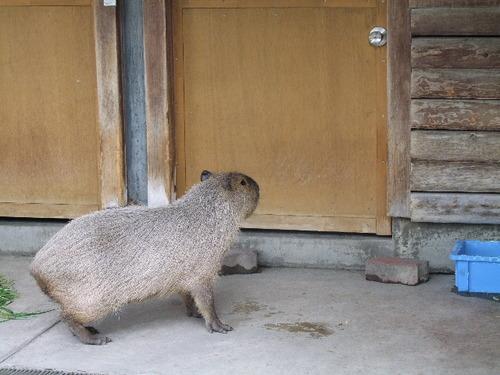 2010_0429100 上野動物園0158.JPG