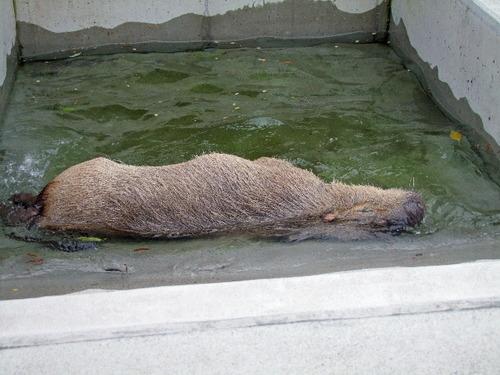 2010_0429100 上野動物園0179_edited-1.JPG